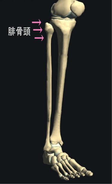 「膝痛(膝か痛い)」🦵