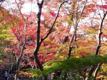 豊臣秀吉が愛した「瑞宝寺公園」(有馬